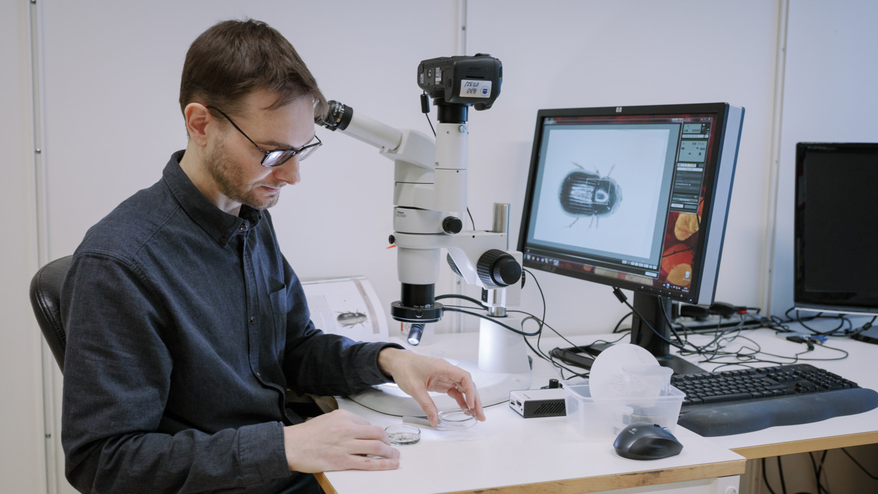 The researcher Phil Buckland is examining insect remains in a microscope