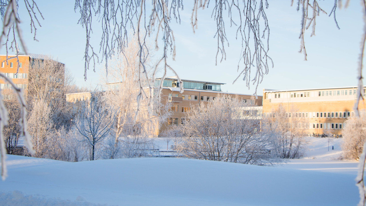 Working at Umeå University