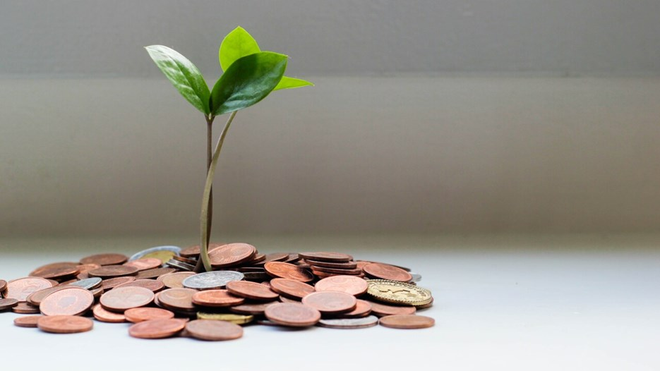Small plant growing in a pile of coins