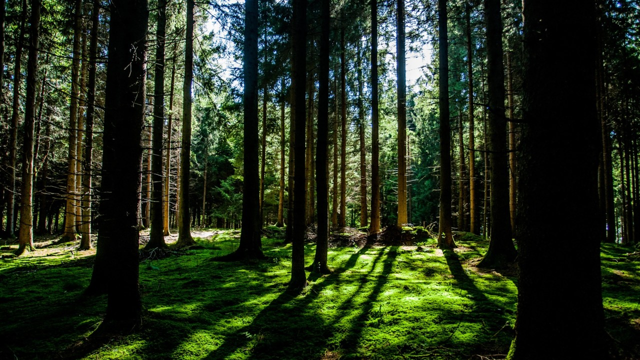 Picture showing a green forest in sunlight.