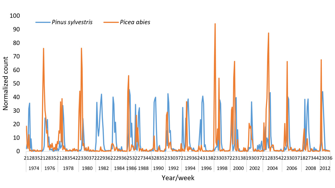Relative abundance of pine and spruce in the air across 40 years in Kiruna